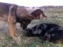 Koně a ostatní zvířata
