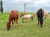 Koně ve výběhu